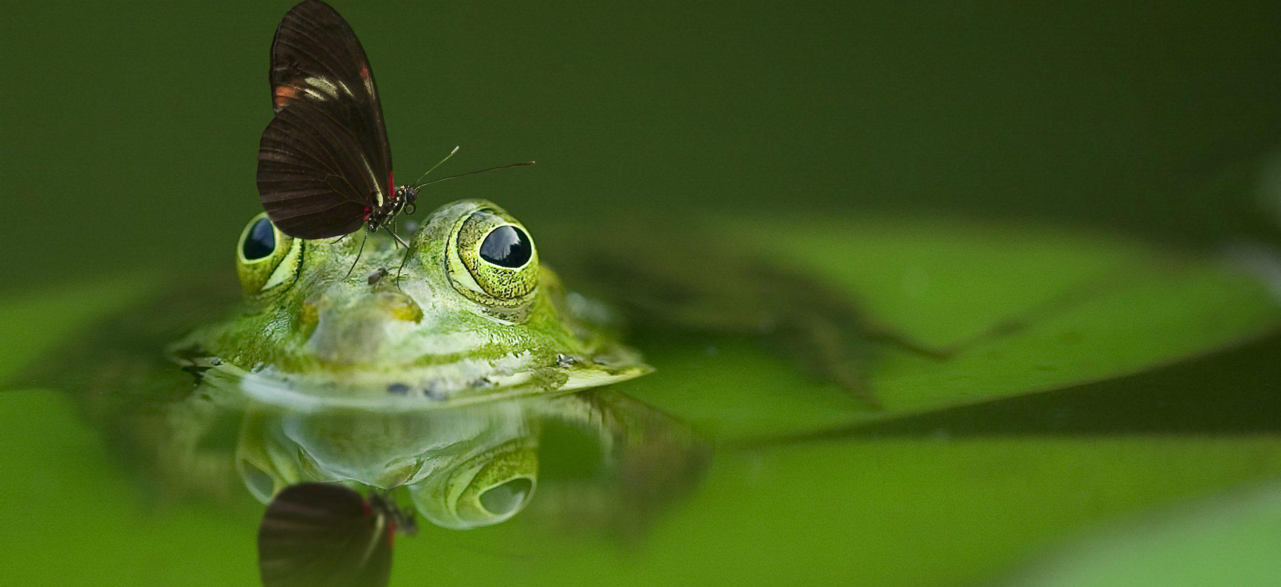 Informační materiály o přírodě a biodiverzitě: Evropská komise potřebuje profi podporu